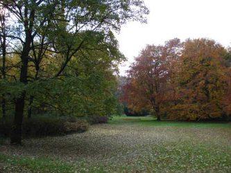 Bella imagen otoñal en Tiergarten
