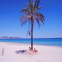 Otra de las playas que hayamos en Ibiza es la extensa playa d´en Bossa