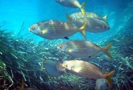 Una de las visiones que se pueden ver en sus fondos marinos.
