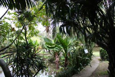 Los jardines botánicos en La Reunión