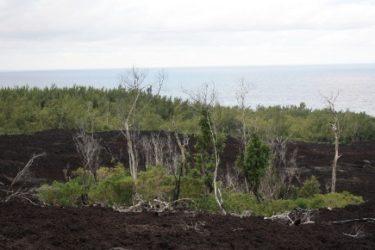 Es llamativo este contraste entre la roca negra volcánica y el gran bosque verdoso, que lo hacen un lugar ideal para el senderismo.