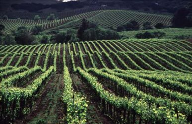 Los viñedos de Sonoma son muy llamativos y bonitos
