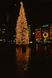En Union Square se ilumina un gran árbol de navidad.