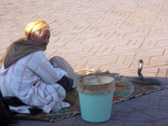 Es normal ver estampas como está con una cobra en la plaza